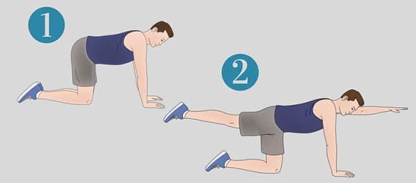 حرکت-ورزشی-مناسب-برای-درمان-دیسک کمر-سگ-پرنده