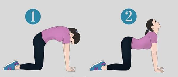 ورزش-برای-درد-سیاتیک-گربه-گاو