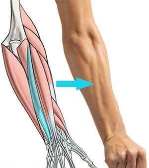 آناتومی عضلات بدن