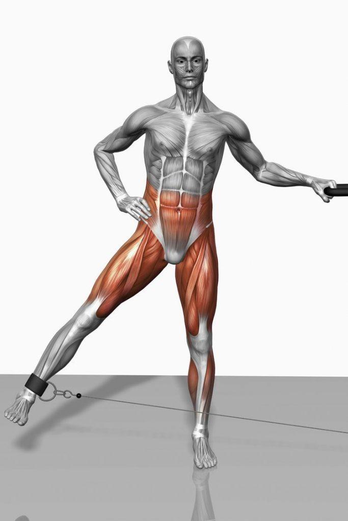 عضلات بدن در بدنسازی