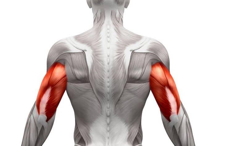 تصویر عضلات بدن